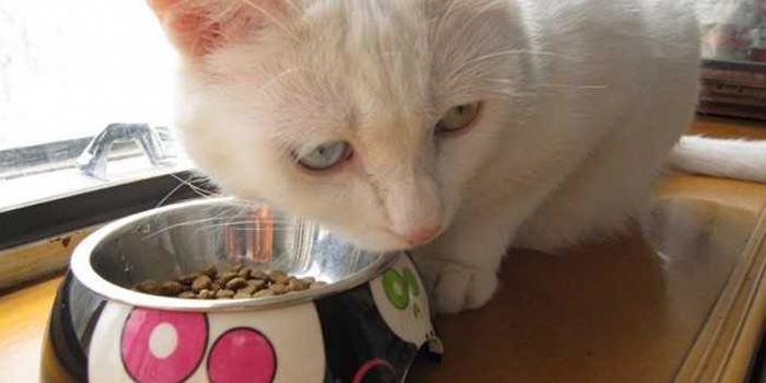 宠物饲料将纳入食品安全规范